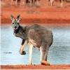 Удивительная Австралия